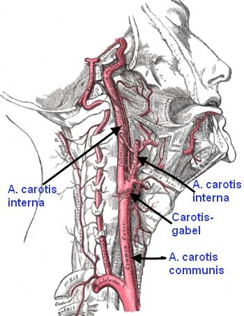 Untersuchungsmethoden der Arterien
