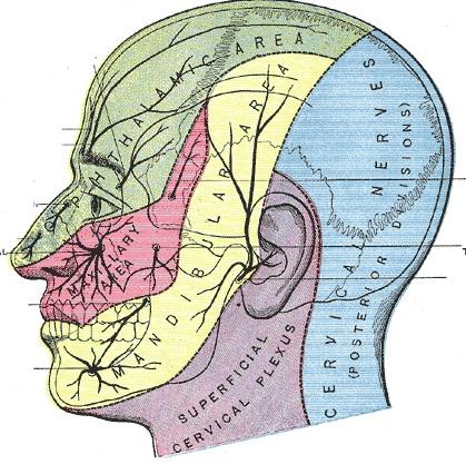 Trigeminusneuralgie für Heilberufe