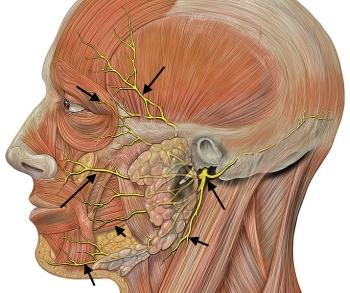 nervenfasern auge funktion