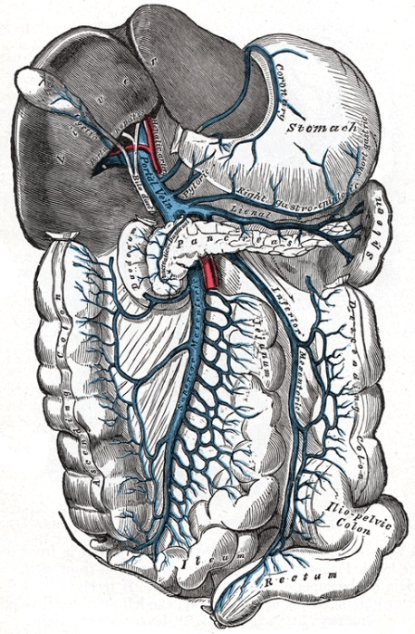 Pfortader-Hochdruck (portale Hypertension)