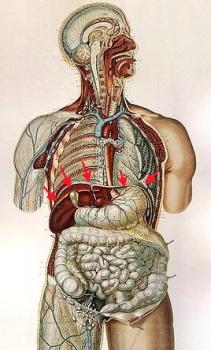 verlauf nervus phrenicus