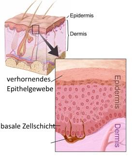 stimulierung der melanozyten
